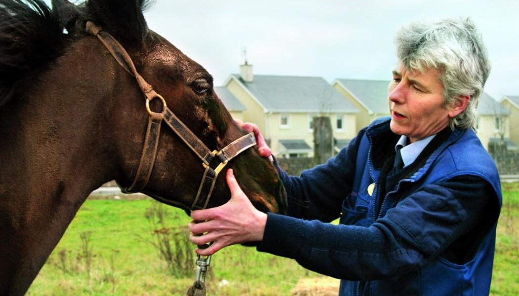 Die Wahrheit über das Leiden der Pferde in Irland