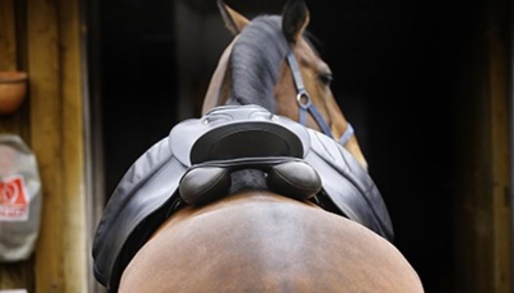 Bindeglied zwischen Reiter und Pferd