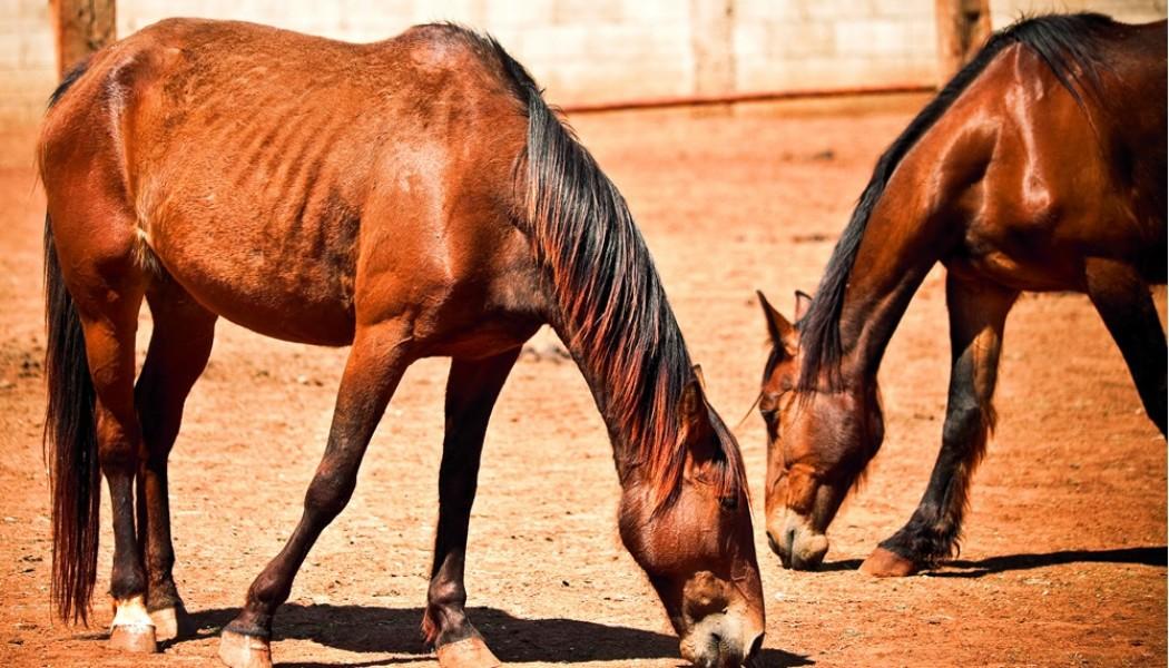 Halbzeit beim Pferdeschutz