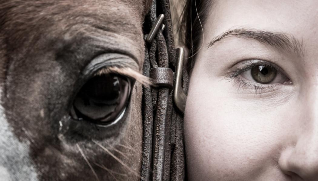 Kavallo – Plattform für die Schweizer Pferde-Szene