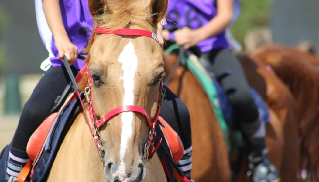 Forschung: Neue Erkenntnisse zu Gesundheitswerten bei Endurance-Pferden (Bild Pixabay)