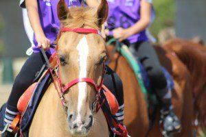 Endurance, Sportnews Schweiz, Distanzreiten, Pferdesport
