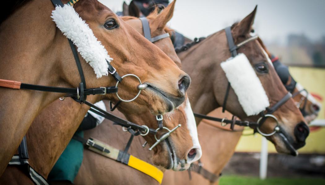 Vollblüter gehören zu den teuersten Pferden der Welt. (iStock, Nigel Kirby Photography