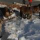 Umweltentwicklungen sprechen für den Einsatz von Arbeitspferden