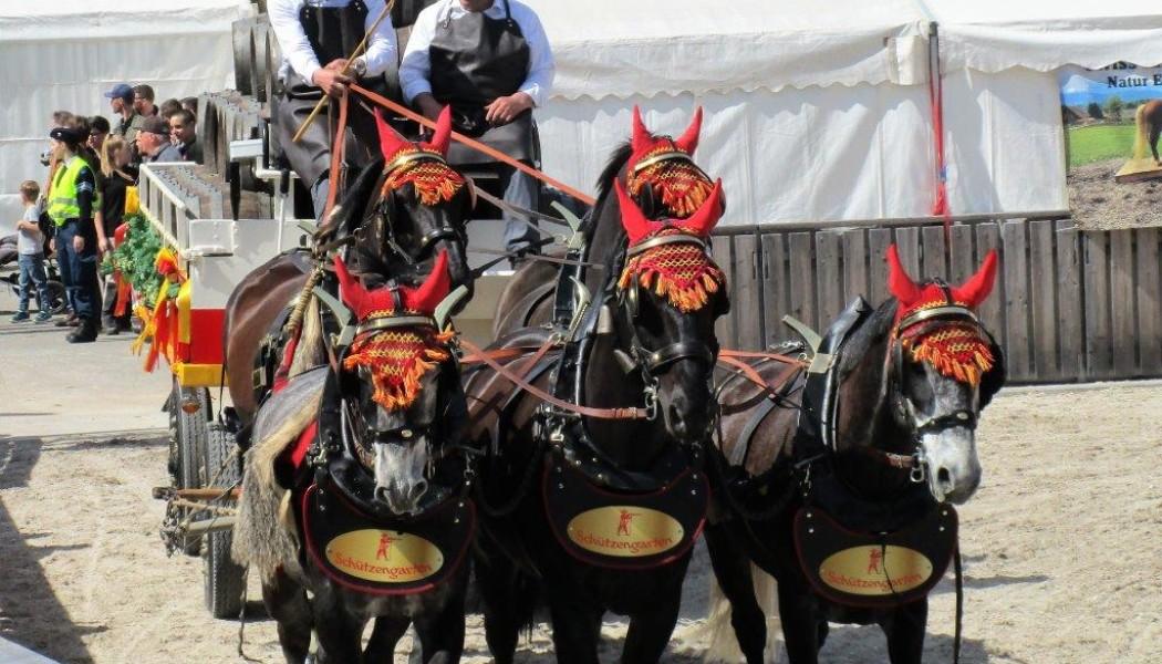 Erlebnis Pferd an der OFFA in St. Gallen