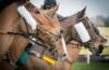 Verschärfte Peitschenregelung: In der Schweiz dürfen ab sofort Reiter die dick ummantelte Peitsche während des ganzen Rennens höchstens drei Mal brauchen. (iStock, Nigel Kirby Photography)