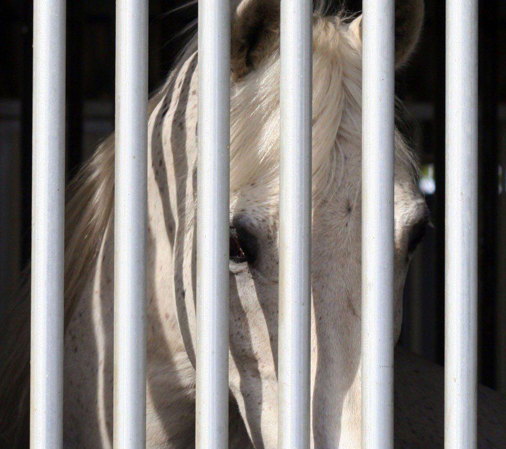 Wegen der Corona-Pandemie haben viele keinen Zugang zu ihrem Pferd. (© Can Stock Photo / cestcmoon)