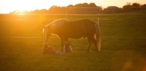 Begegnungshof Hintermatt – weil Freiheit das wertvollste für Mensch und Tier ist