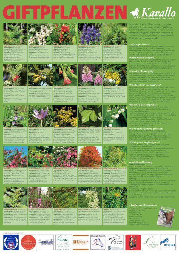 Giftpflanzen-Plakat