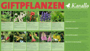 Die Neuauflage 2020 des Kavallo-Giftpflanzen-Plakats.