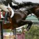 Spitzensport mit Pferden – ja oder nein?