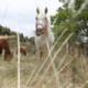 Zusammenarbeit fürs Pferdewohl auch in Krisenzeiten