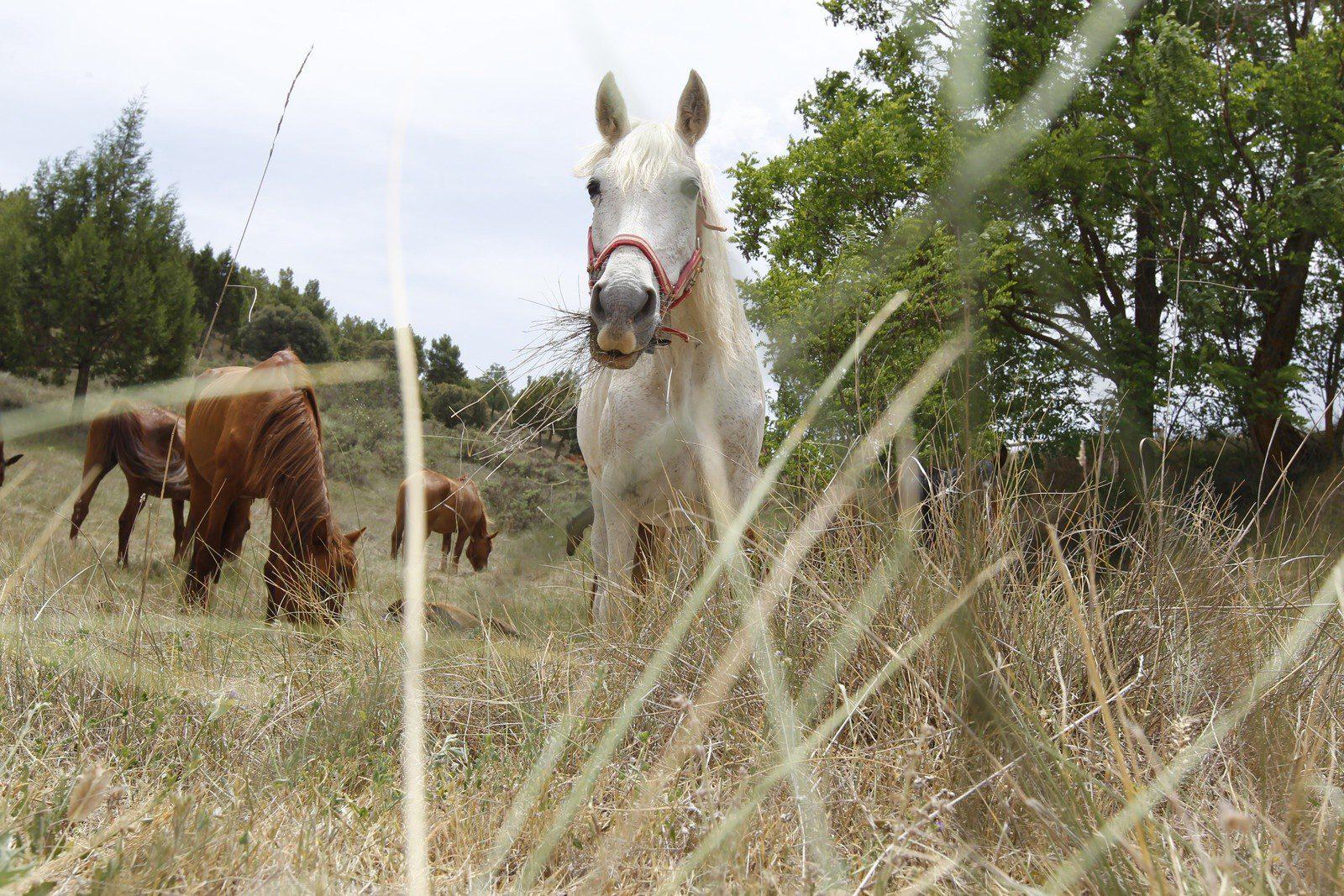 Komplementärmedizin beim Pferd