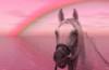 Nachruf auf ein verstorbenes Pferd einreichen