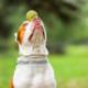 Wenn ein Vertreter einer sogenannt gefährlichen Rasse wie der Pitbull irgendwas angestellt hat, wird nicht einmal geprüft, ob es an diesem individuellen Hund oder womöglich an seinem Halter lag, es wird gleich die ganze Rasse verboten (© Can Stock Photo/YouraPechkin)