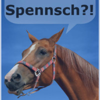 Hm… Was würden Pferde sagen, wenn sie sprechen könnten?