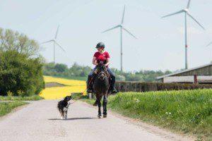 Damit das Reiten mit dem angeleinten Hund funktionieren kann, müssen die Grundlagen absolut zuverlässig sitzen. (Foto: Maresa Mader)