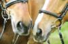 Swiss Olympic finanziert strukturrelevante Projekte auch von Pferdesportverbänden. (Bild zVg)