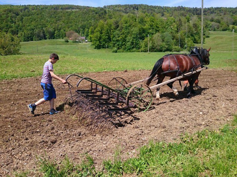 Einstieg ins landwirtschaftliche Arbeiten mit Pferden