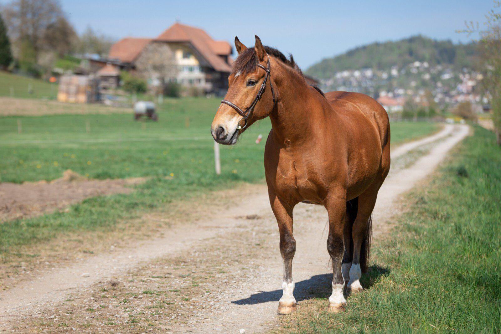 Grundlagen der Pferdezucht und -haltung
