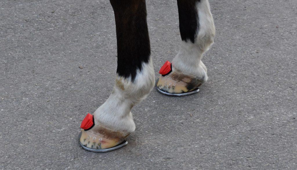 Die je 60 Gramm leichten Sensoren werden dem Pferd an die Hufe geklebt.