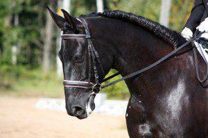Fotowettbewerb, Bildchallenge, Sport-Pferd, Pferdesport
