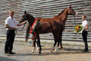 Das erfolgreichste Einsiedler Fohlen aus einer traditionellen Stutenlinie gewinnt 5'000 Franken. Lazaro aus der Klima-Linie wurde gleichzeitig auch zum Sieger des Fohlenchampionats der Pferdezuchtgenossenschaft Einsiedeln gekürt.