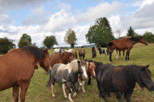 Pferd im Alter, Cushing, Hufrehe, Altersweide