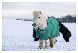 Decken helfen «sensiblen» Pferden (alte, kranke etc.) oder geschorenen Pferden, wenn die Temperaturen fallen.
