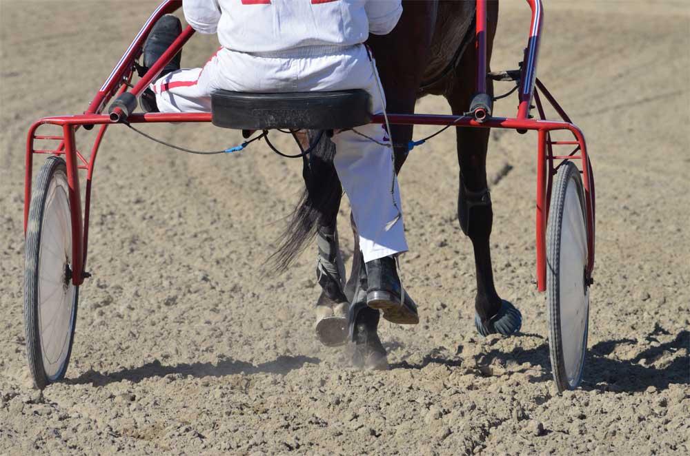 Pferderennen, Schweiz, Renndaten 2021