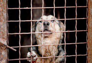 Zugenommen haben Vorfälle bei den Heimtieren, insbesondere bei den Hunden. © Can Stock Photo / Gera8th