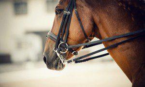 Welches Gebiss ist für mein Pferd das Beste? Eine Übersicht der Trensen und ihrer Wirkung.