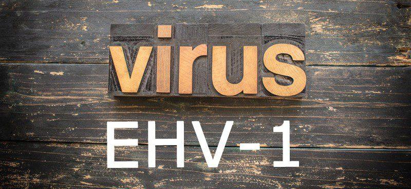 EHV-1 Virus in der Schweiz ausgebrochen. © Can Stock Photo / enterlinedesign