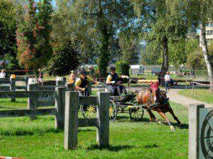 Tierschutz, Pferdesport, Bericht