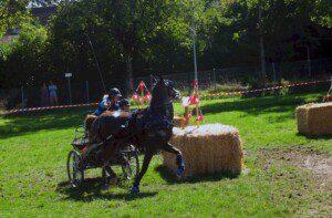STS-Recherche «Pferdesportturniere 2020». Die Bedingungen an der Schweizermeisterschaft in der Kategorie Fahren fielen negativ auf. (Bild: STS)