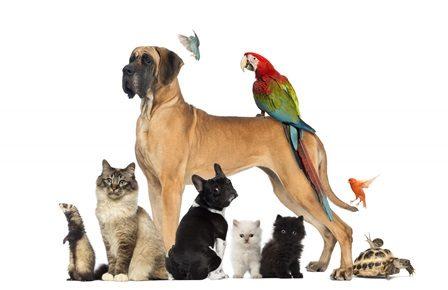 cdVet Haustiersprechstunde - Thema: Giardien bei Hunden und Katzen