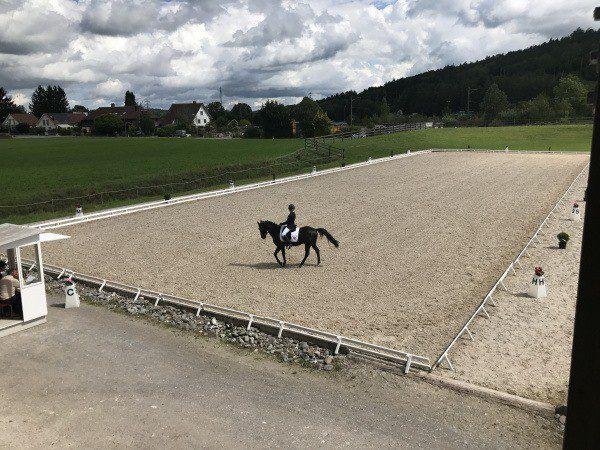 Trainingsdressur Winterthur