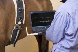 Das Audicor® System im Einsatz. Mittels Analyse der simultan mit einem Elektrokardigramm aufgezeichneten Herztöne soll in Zukunft die Herzfunktion und die Herzgesundheit von Pferden beurteilt werden können.