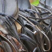 Gruppenlogo von Pferdebetriebe Schweiz