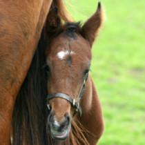 Gruppenlogo von Pferdezucht Schweiz