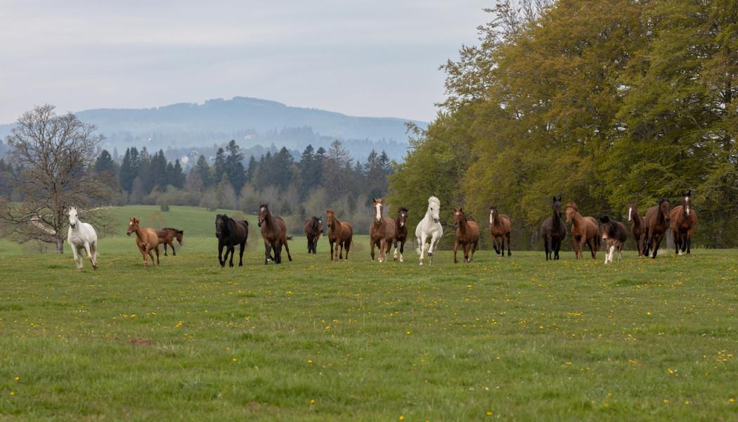 Wir bieten Pferden, Ponys und Eseln einen artgerechten Lebensabend